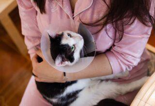 Kedimin Hasta Olduğunu Nasıl Anlarım ?