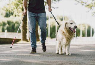 Rehber Köpek Nedir?