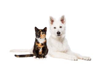 Kedim veya Köpeğim kusuyor ne yapmalıyım ?