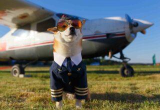 Köpeğimi Uçağa Bindirebilir miyim? Hangi Kurallara Dikkat Etmeliyim?