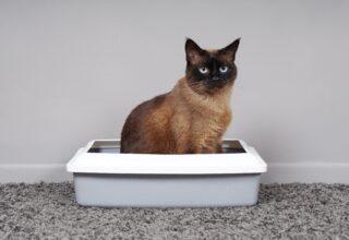 Kedi Kumu Nasıl Temizlenir?