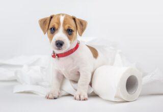 Köpeklerde Kabızlık Nedenleri ve Tedavisi