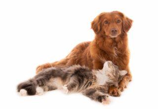 Kedili Eve Köpek Getirebilir Miyim?
