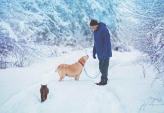 Kış Mevsiminde Evcil Hayvan Bakımı Nasıl Yapılmalı?