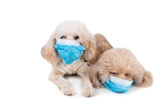 Kedi Ve Köpeklerden İnsana Geçebilecek Hastalıklar