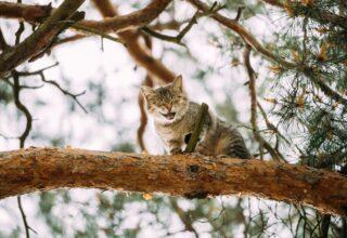 Kedilerde Hapşırma Sorunu ve Nedenleri