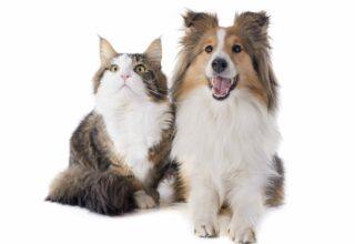 Evcil Hayvanların Ömrünü Uzatma Tavsiyeleri
