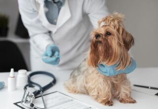 Köpeklerde Kalp Masajı Nasıl Yapılır?