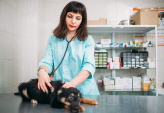 Köpeklerde Hastalık Belirtisi