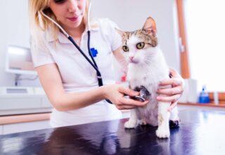 Kedilerde Periodontal Hastalık Nedir?