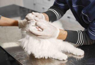 Kedi Sakinleştirici İlaçlar Her Zaman İşe Yarar mı?