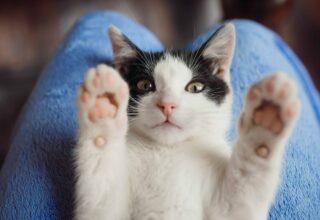 Kedim Evden Kaçıyor, Ne Yapmalıyım?