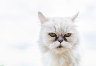 Agresif Kedinin Eğitimi Nasıl Verilir?