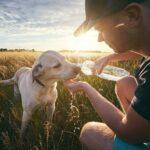 Köpeklerde Günlük Su Tüketimi Ne Kadar Olmalı?